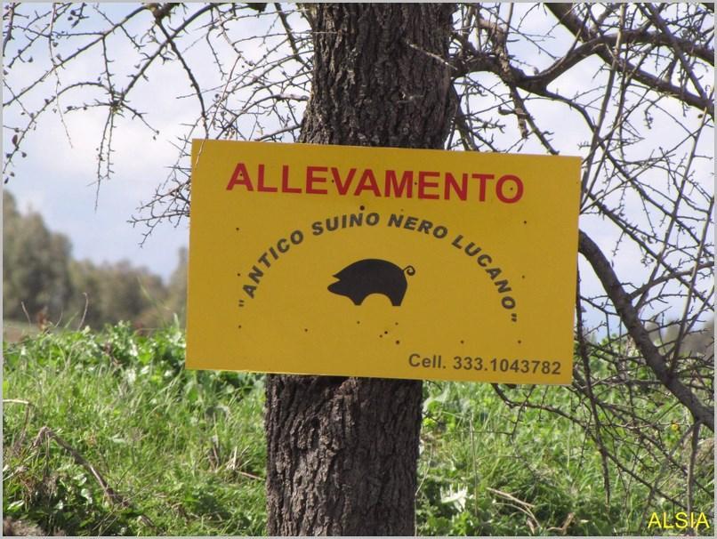 Azienda Agricola Magnante Angelo